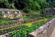 garden / Potting sheds and gardens I love - cobweb free mostly