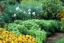 Yard and Landscape ideas / Inspiration for ongoing landscape projects. / by Beth Falk