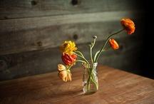 The way of flowers / by joão figueiredo