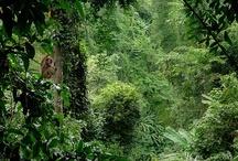 A Selva / by joão figueiredo