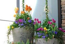 Garden / Ideas, useful items, wish list for the garden