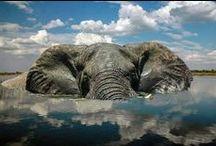 Elephants / by Kelsey Bell