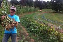 RVA Producer of the Week / Each week we put the spotlight on one producer suppling Fall Line Farms online farmers market