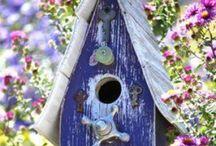 Birds Live Here / by Patricia B