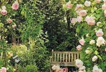 gardening and outdoor living / by Deborah Winters