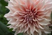 how does your garden grow? / just some of my favorite flowers and gardens along with fun garden stuff i find around the web...enjoy!