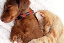 Pups and kits, dogs and cats / Cute animals