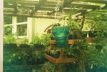 Garden Dreams / Wishes for my little urban farm
