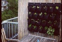 Roof terrace / Dakterras / Ideeen voor ons dakterras: vertical gardening steigerhouten meubels