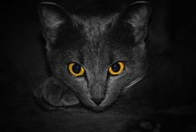 Aminals: Cats / by Melissa Atwell
