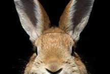 Aminals: Rabbits / by Melissa Atwell