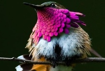 Aminals: Birds / by Melissa Atwell