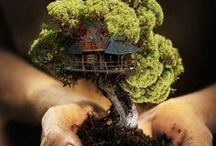 Bonsai / Bonsai is a solid reason to be patient...