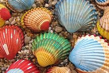 Seashells / Anybody out there disliking seashells?  With my seashells, I will collect them as well.