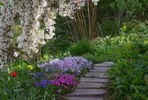 Garden and Landscape ideas