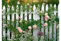 Garden - Pretty / Green spaces, flowers and pretty places to enjoy outside.  / by Heather Waldron