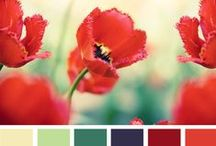 Mood Boards and Color Palettes / Color palettes and mood boards for lots of beautiful color inspirations for any room and mood that you are in.