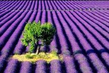 From Provence with love