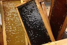 Honey Bee Mine / I love honey! The syrupy texture. The sweet taste. The warm aroma. Honey makes me happy!