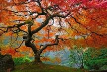 Autumn...my favorite season / by Tonya Roberts