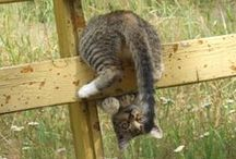 Lovely crazy cats  / by Ghita