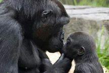 Mama's n Babies