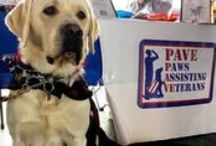 Operation: Freedom Dogs / Dogs helping vets overcome PTSD and helping kids with vision impairments!