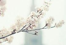 Flower & Nature / Inspirations florales et naturelles de toutes sortes