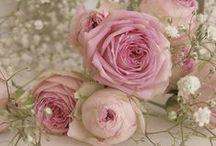Roses & Peonies / by Maureen