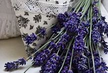 Lavender / by Maureen