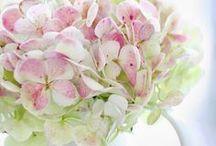 Hydrangea's / by Maureen