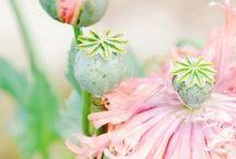 Flowers ~ Flowers ~ Flowers / by Maureen