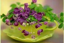 Violets / by Maureen