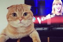 #NationalCatDay / Happy #NationalCatDay! The purrfect day to thank all of our #CatsWatchingTaylor! / by The Voice