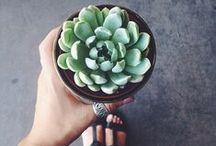 Plante Succulente / Photos d'inspiration pour décorer une maison ou un appartement avec des plantes succulentes