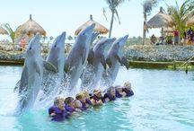 Dolphins / by Britt van den Arend