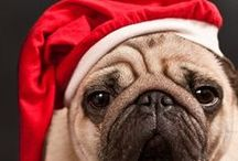 Christmas and the Holidays / Some of our favorite ideas for the Holiday Season