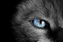 Animal eyes / by Britt van den Arend