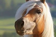 for the love of horses / by barbara paulsen
