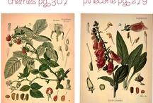 Printables, decoupage and paper I like / by Ana-Teresa Alves