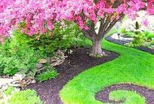Garden: Decor / Tips for growing ornamental plants, and ideas for arranging, enhancing and accenting outdoor spaces with decorations and accessories.