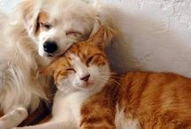 Pets: Cat Dog & More / Tips and advice on cat and dog care, innovative pet products to buy, crafts to make, dog health, cat health, and recipes for DIY homemade food and treats for cats, dogs, and other animals (or non-human family members).