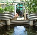 Garden: Aquaponics & Fish / Plans, tips and advice for aquaponics, aquaculture, building a DIY pond or tank, and fish farming. Aquaponics set-up ideas, how to raise fish for food and for fertilizing the garden.