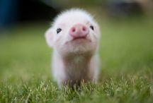 Cuteness!! / by Jennifer Wright