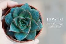Home: Succulents / Succulents have won over my heart and I can't wait to add some to my indoor decor. Here I collect tips for planting succulents, growing succulents, displaying succulents, and indoor gardening.