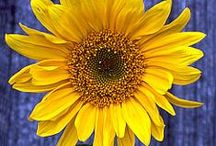 fun...sunny sunflowers... / by Debbie Young
