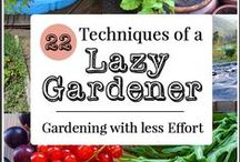 Gardening Tips and Strategies - Outside and Inside / Outside and inside ideas on how to grow a garden. Troubleshooting plant or soil problems, bugs and insects to watch out for, growing hints, cheat sheets, growing charts, how  much to water, which ones like sunshine or shade. Composting tips. Making soil mixtures the best.
