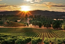 Wine Country: Napa & Sonoma / A visual love letter to Northern California's Wine Country / by Frank Howard Allen