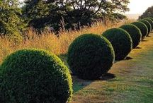 Hedge - Topiary - Knots - Espaliers / Clipped, trimmed & shaped by the human hand, for the most part.
