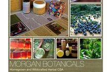 Herbal CSA Newsletter